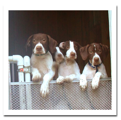 Puppies at kennel door
